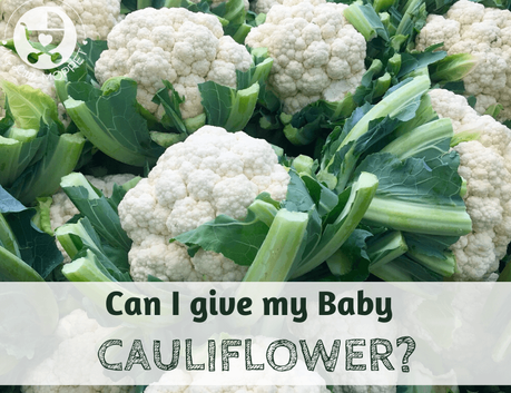 Cauliflower has become quite popular across the world nowadays, but when it comes to introducing it to babies, parents are confused: Can I give my baby cauliflower?