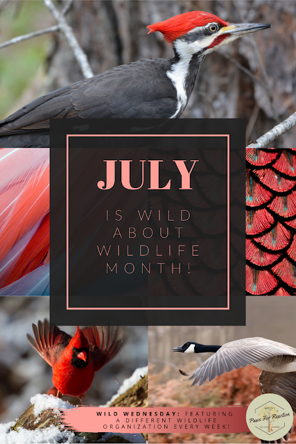 Wild Wednesday: Ottawa Valley Wild Bird Care Centre is the only rehabilitation center exclusively dedicated to wild birds