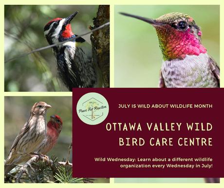 Wild Wednesday: Ottawa Valley Wild Bird Care Centre rehabilitation center dedicated to birds