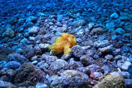 marine-life-fish