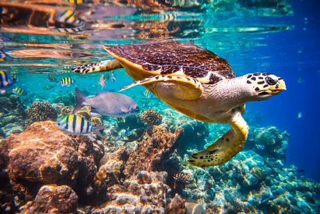 marine-life-dying