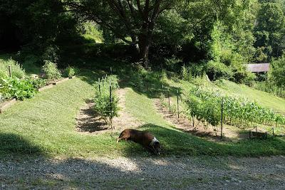 Making a Garden