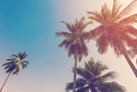 big-palm-tree