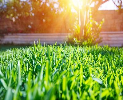 Common Landscaping Problems and Ways to Fix Them