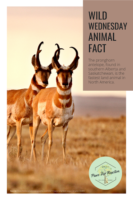 Wild Wednesday: Animal Fact Canada
