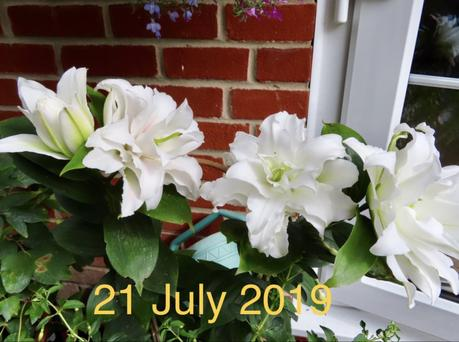 Six on Saturday 25/07/2020