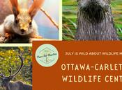 Wild Wednesday: Ottawa-Carleton Wildlife Centre More Rehabilitation #WildWednesday