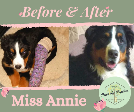 Before & After: Meet this month's Paws For Reaction featured pets!