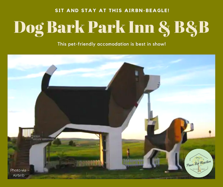 Dog Bark Park Inn: Sit & Stay in this pet-friendly AirnBn-Beagle