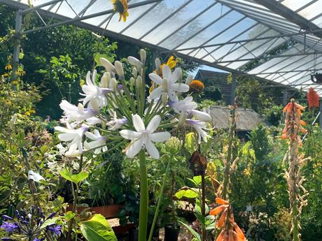 A visit to Swines Meadow Farm Nursery on the hottest day