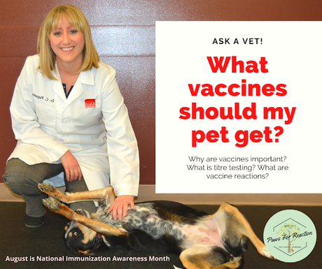 Ask a vet: What vaccines should my dog and cat get?