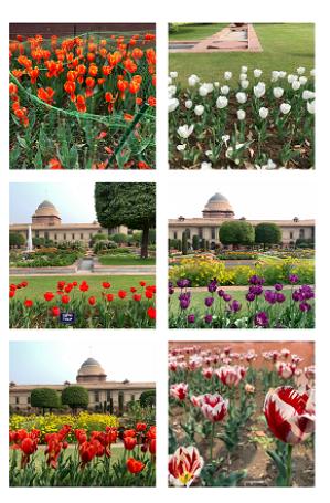A Quick Guide to Mughal Garden, Rashtrapati Bhavan Delhi