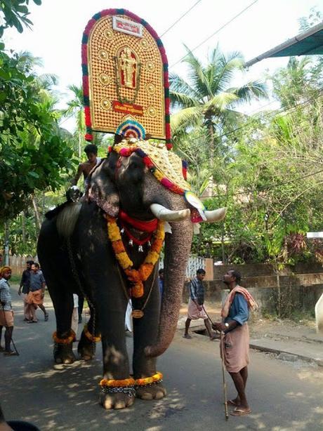World Elephant day ~  Chirakkal Kalidasan