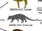 Where SARS-CoV-2 Come From?