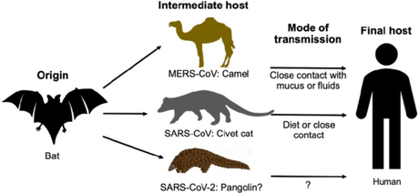 Where did SARS-CoV-2 come from?