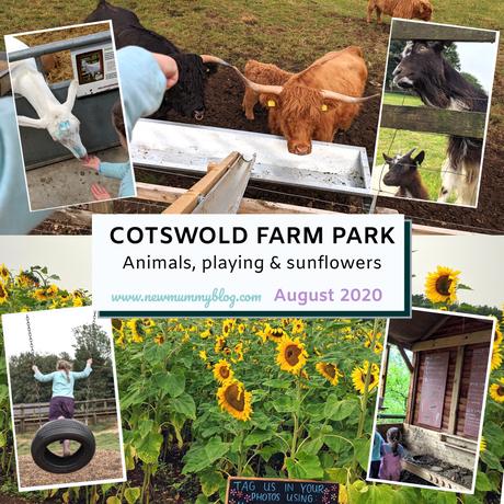 Cotswold Farm Park – post-lockdown August 2020