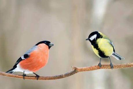 pair-of-birds-sitting-on-a-branch