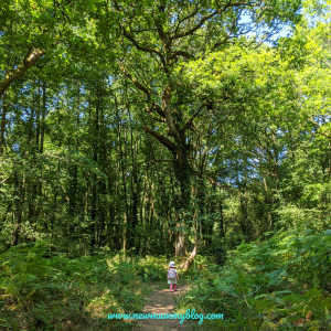 Wenchford Picnic Site REVIEW – fun playing & paddling in the Forest of Dean   Family days out