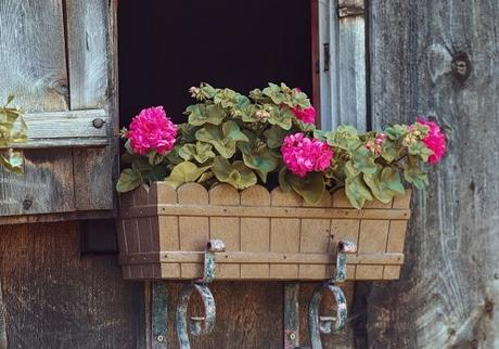 How to Choose the Best Flowers for Window Boxes