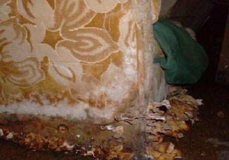 Repair Flood Damage to Prevent Mold in Your House