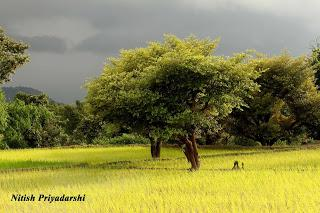 Why Indian farmers must give preference to less water consuming crops.