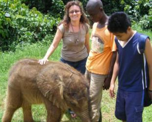The Muzungu meets the elephant