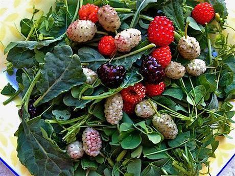 foraged salad.jpg