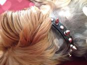 After Getting Your Size, Definitely Need Spiked Collar!
