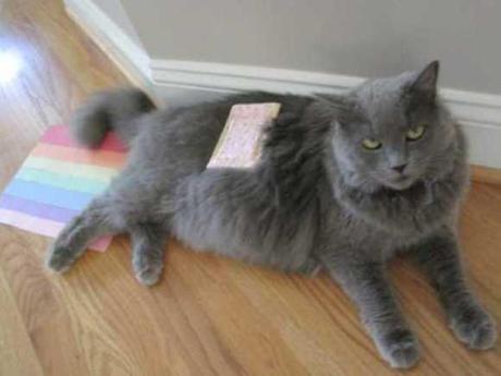 Nyan Cat Lives! Nine Cute Real Live Nyan Cats