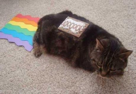 Nyan Cat Lives! Nine Cute Real Live Nyan Cats