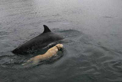 Animal smarts: What do dolphins and dogs know?