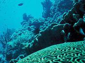 Potential Solution Endangered Coral Reefs