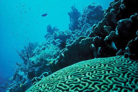 A potential new solution for endangered coral reefs