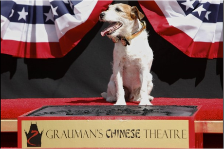 Uggie, Canine Star of 'The Artist,' is First Dog to Put Paw Prints in Cement