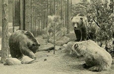extinct animals essay