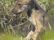 Wolf Pups Born Into Species Survival Program, Name Them!
