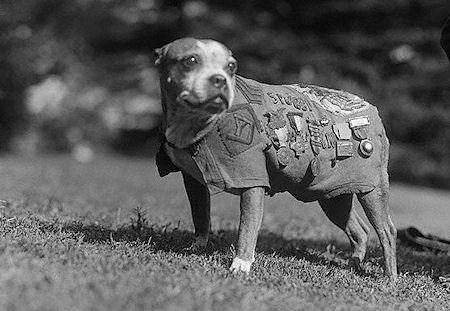 A Brief History Of Awesome Dogs