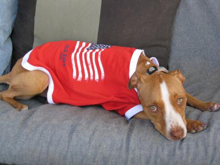 Independence Day Sends More Dogs to Shelters