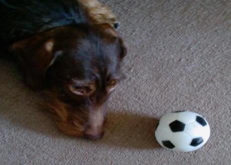 Dogs predicting Euro 2012 football outcomes?