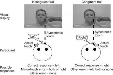 Mirror Touch Synesthesia and the Genetics of Synesthesia