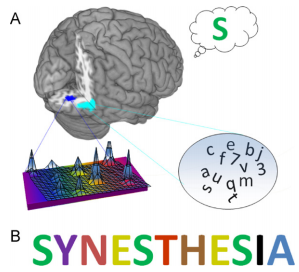 Model of grapheme-color colored sequence synesthesia
