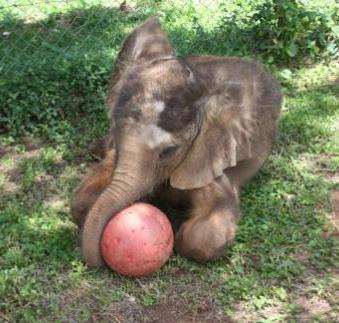 Baby elephant Charles at five months old