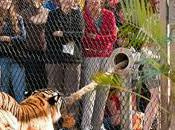 Play With Tiger Busch Gardens