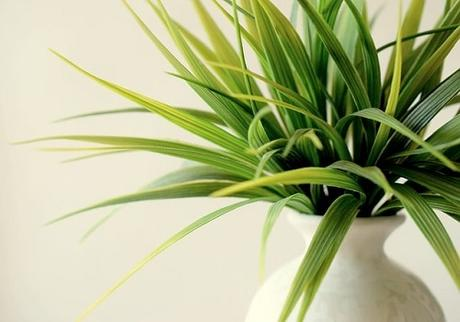 Indoor Plant Pests: Bug Identification & Control
