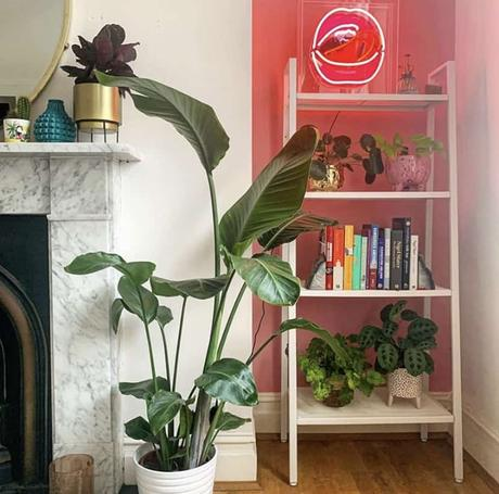 Pink and white living room inspiration with lots of lush house plants