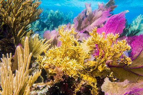 Mesoamerican Barrier Reef  ~ heard of Parametric Insurance !
