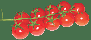 CALENDER OF THE TOMATO GROWING SEASON