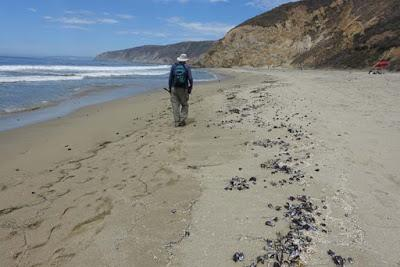 POINT REYES NATIONAL SEASHORE, California: McClure's Beach