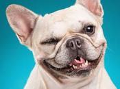 300+ Best Names French Bulldog Their Meanings