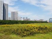 Want Vacant Land? Take Note These Don'ts